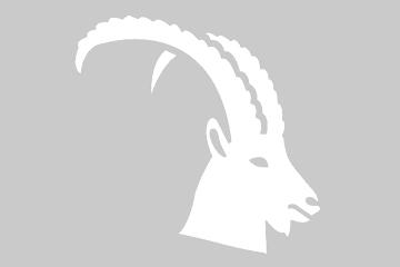 A vendre: grande tête de cerf