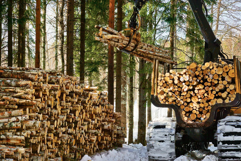 La forêt, milieu multifonctions