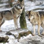Grands prédateurs